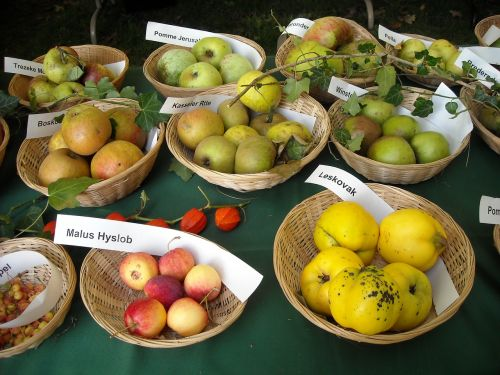 apples fruit fruits