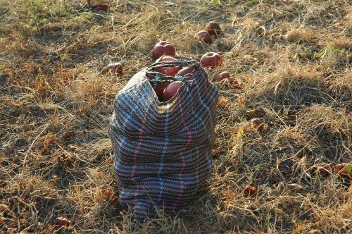 apples bag harvest