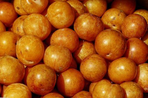 apricot fruit stone fruit