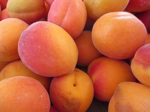 apricots fruit apricot-tree