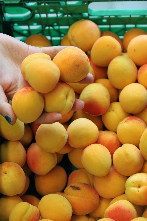 apricots summer orange