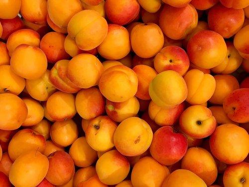 apricots  fruits  fruit