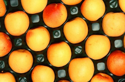 apricots fruit ripe
