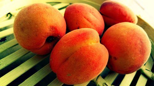 apricots fruits bio