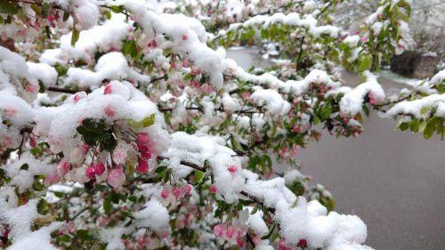 april snow spring
