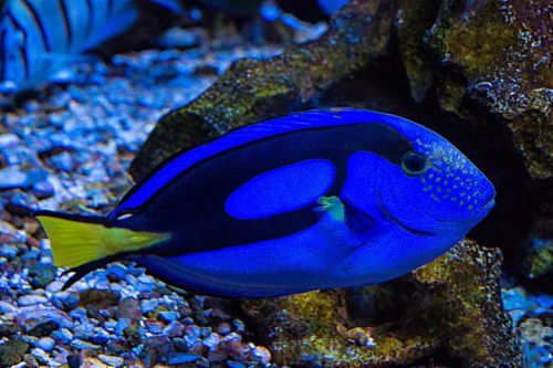 aquarium fish sea aquarium