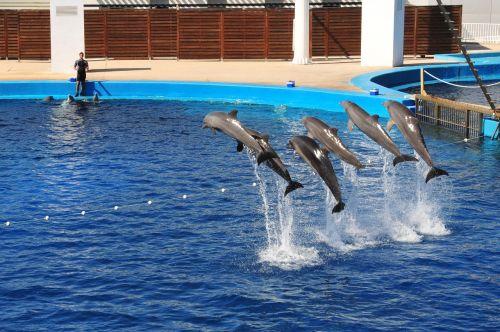 dolphins show aquarium