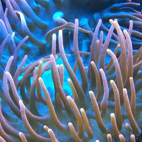 aquarium water sea