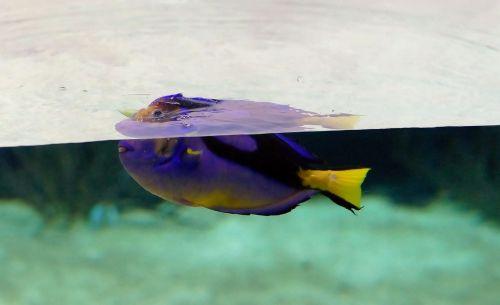 aquarium fish underwater world
