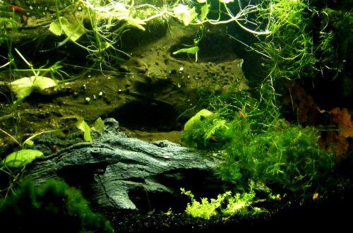 aquarium aquatic plants creature