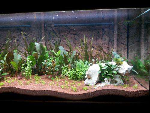 aquarium aquatic plants terrarium