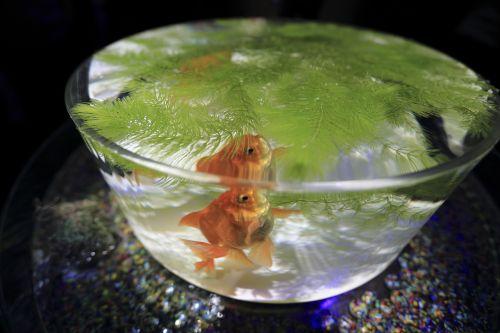aquarium fish fin