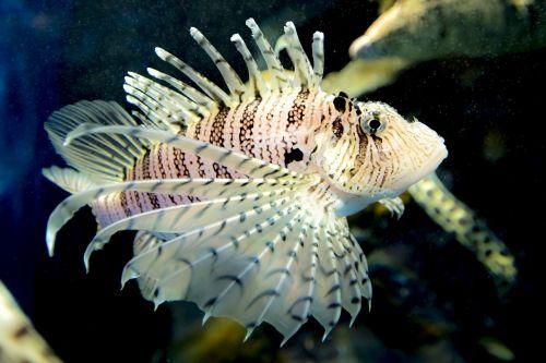 aquarium coral fish marine