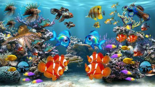 aquarium fish fish tank