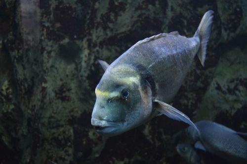 aquarium marine water