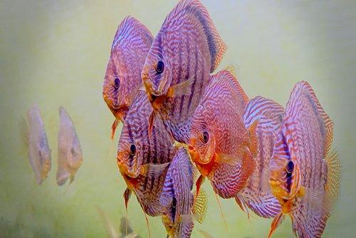 aquarium  fish  water