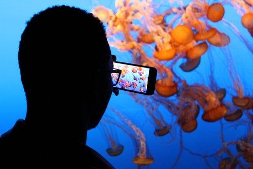 aquarium  jellyfish  underwater