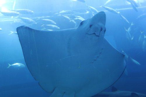 aquarium  dubai mall  dubai