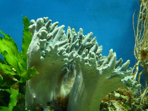 aquarium coral water
