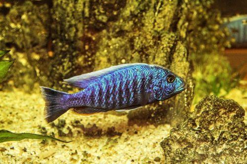 aquarium toy fish