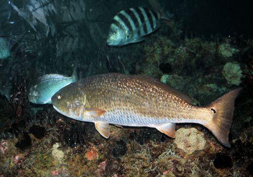 gyvūnai, gamta, kitas, žmonės, žuvis, vanduo, turistai, akvariumo žuvis 2
