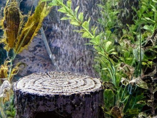 akvariumas, scena, vaizdingas, Rokas, augalas, burbulas, burbuliukai, vanduo, šviesa, akmuo, akvariumo scena