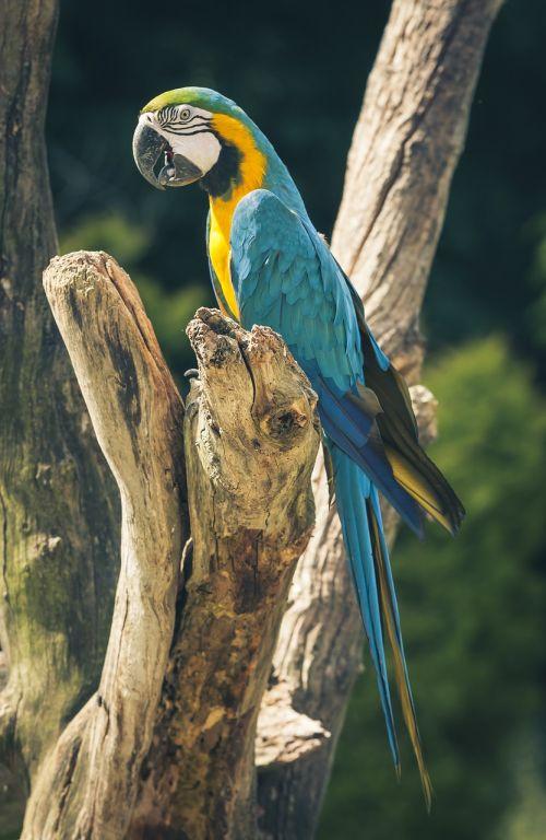 ara parrot bird