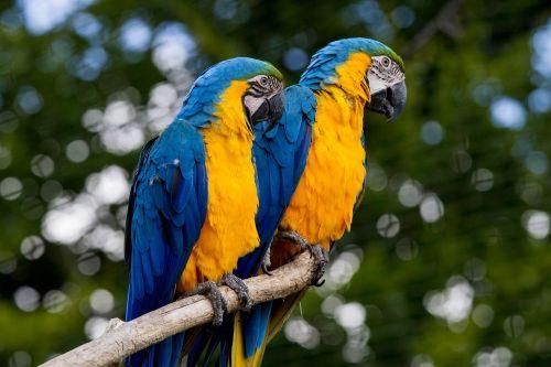 ara parrot colorful