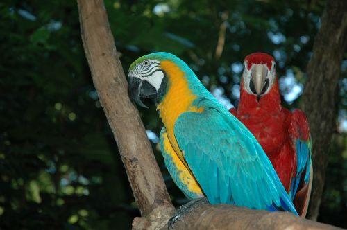 ara birds brazil