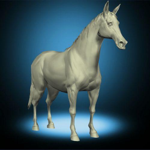 Arabian Horse Standing