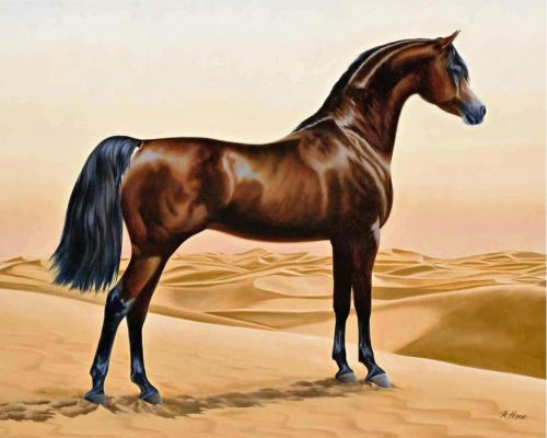 Arabian Horses In A Tent