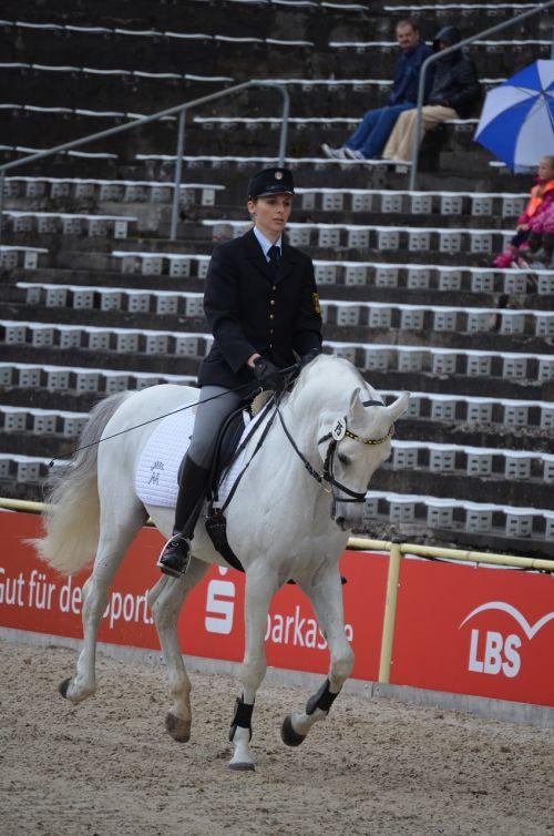arabian stallion mold stallion