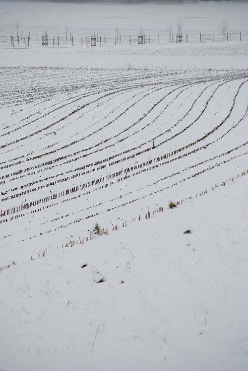 arable snow lines