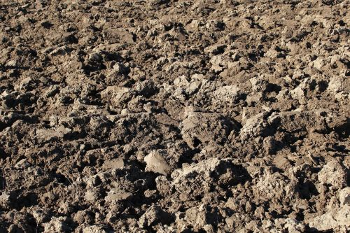 arable ground agriculture