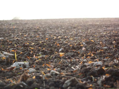arable field arable land