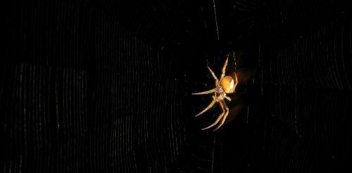 arachnid spider insect