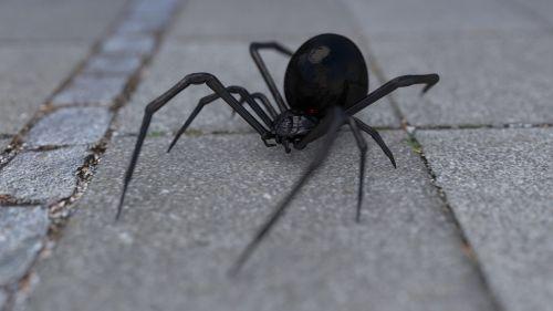 arachnophobia spider widow