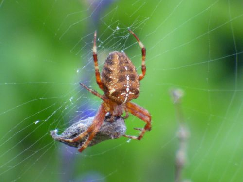 Spider And Its Meal