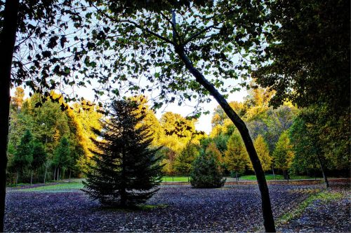 aranjuez garden of the prince autumn