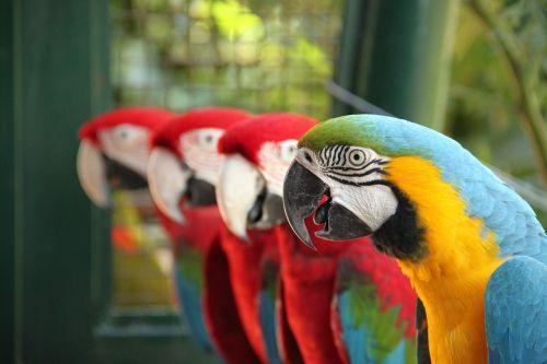 arara nature bird