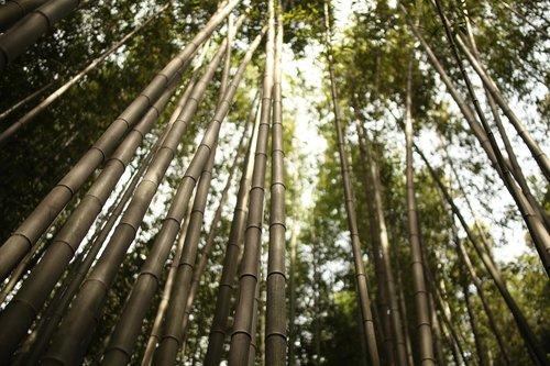 arashiyama  bamboo  japan