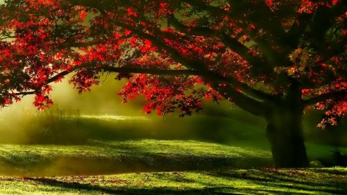 Beautiful Tree In The Mist