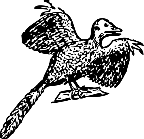 archaeopteryx bird prehistoric