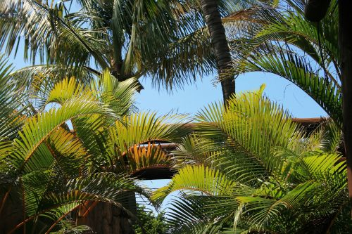 Arched Palm Leaves