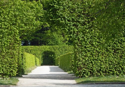 archway hedges green