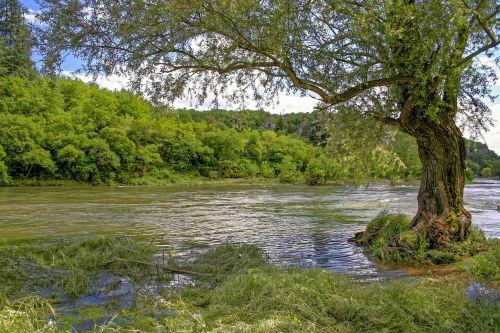 ardèche,upė,kanoją,ardeche tarpeklis,balazuc,šventė,kraštovaizdis,gamta,medžiai,senas medis,į pietus,vasara,vandens Kraštas,ramus,france,vanduo,žalias,tyli vieta
