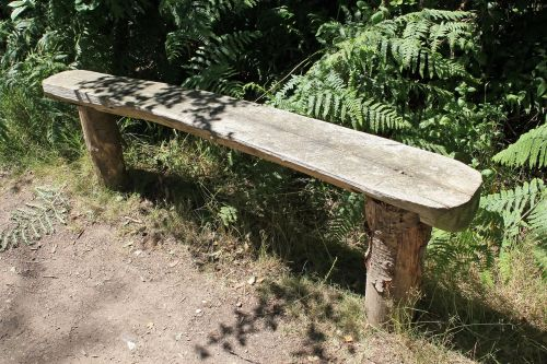area bench forest