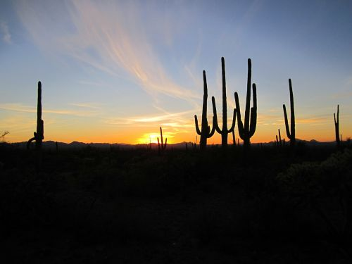 arizona sunset cacti
