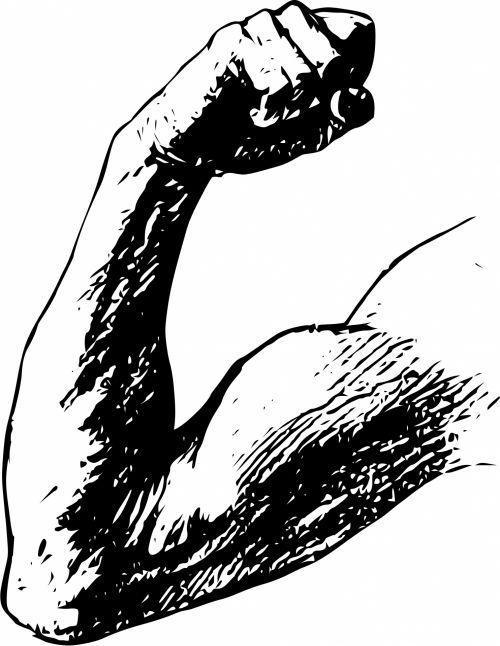 Arm Muscle Flex
