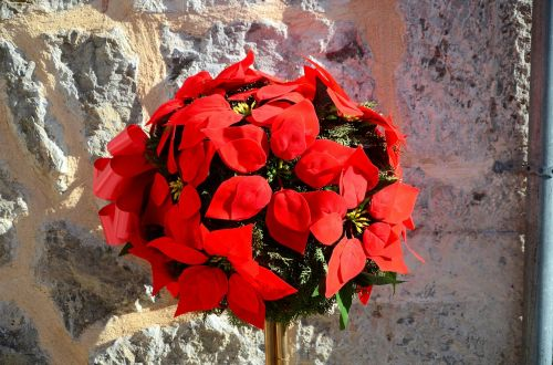 arrangement,blumenstock,mallorca,sun,spring,red,flower,plant,blossom,bloom,bloom,flowers